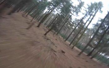 metalldanny forest