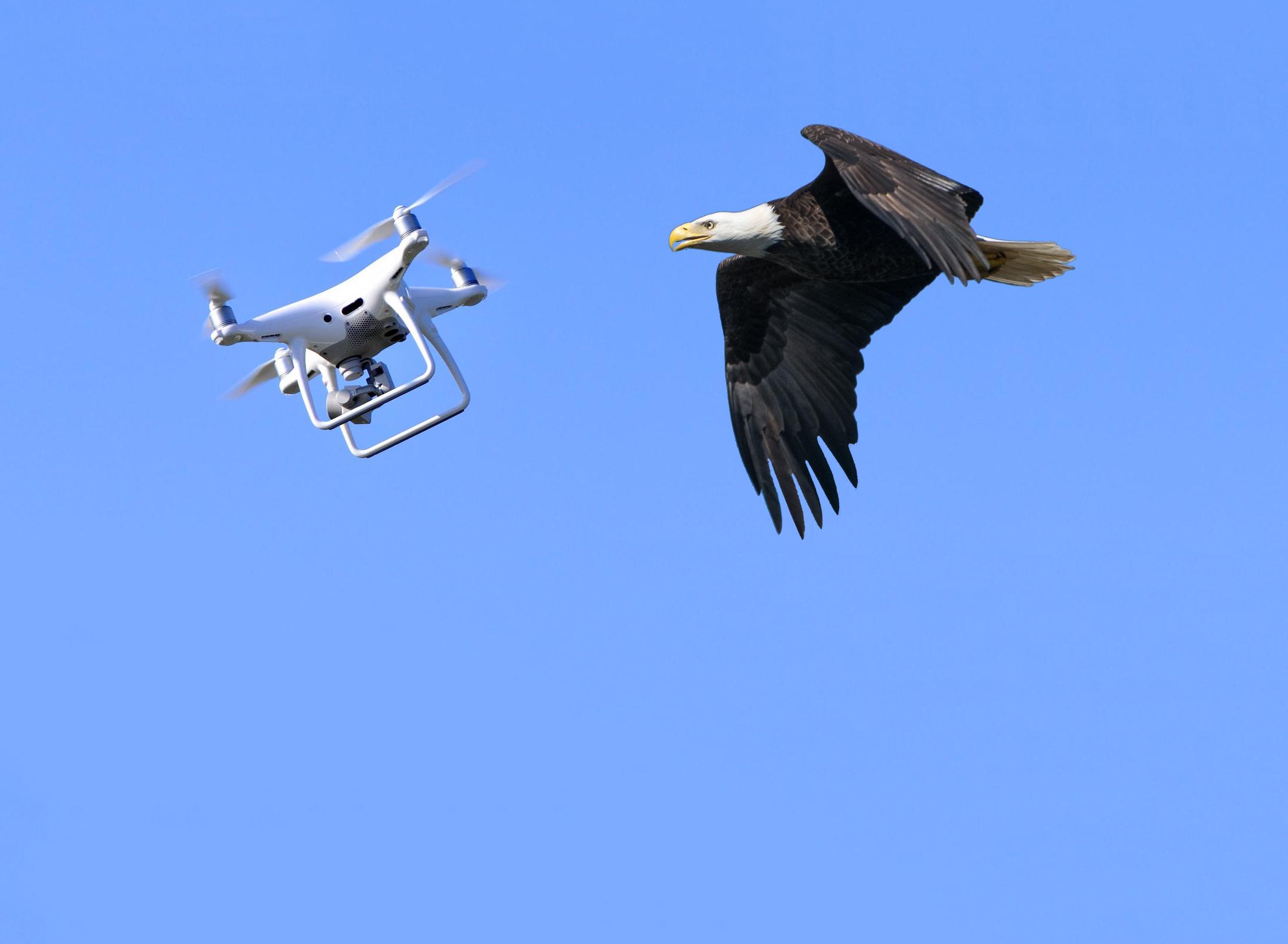 Ne Pas Les Aigles Chasseront En Hollande Drones 5B56qwx